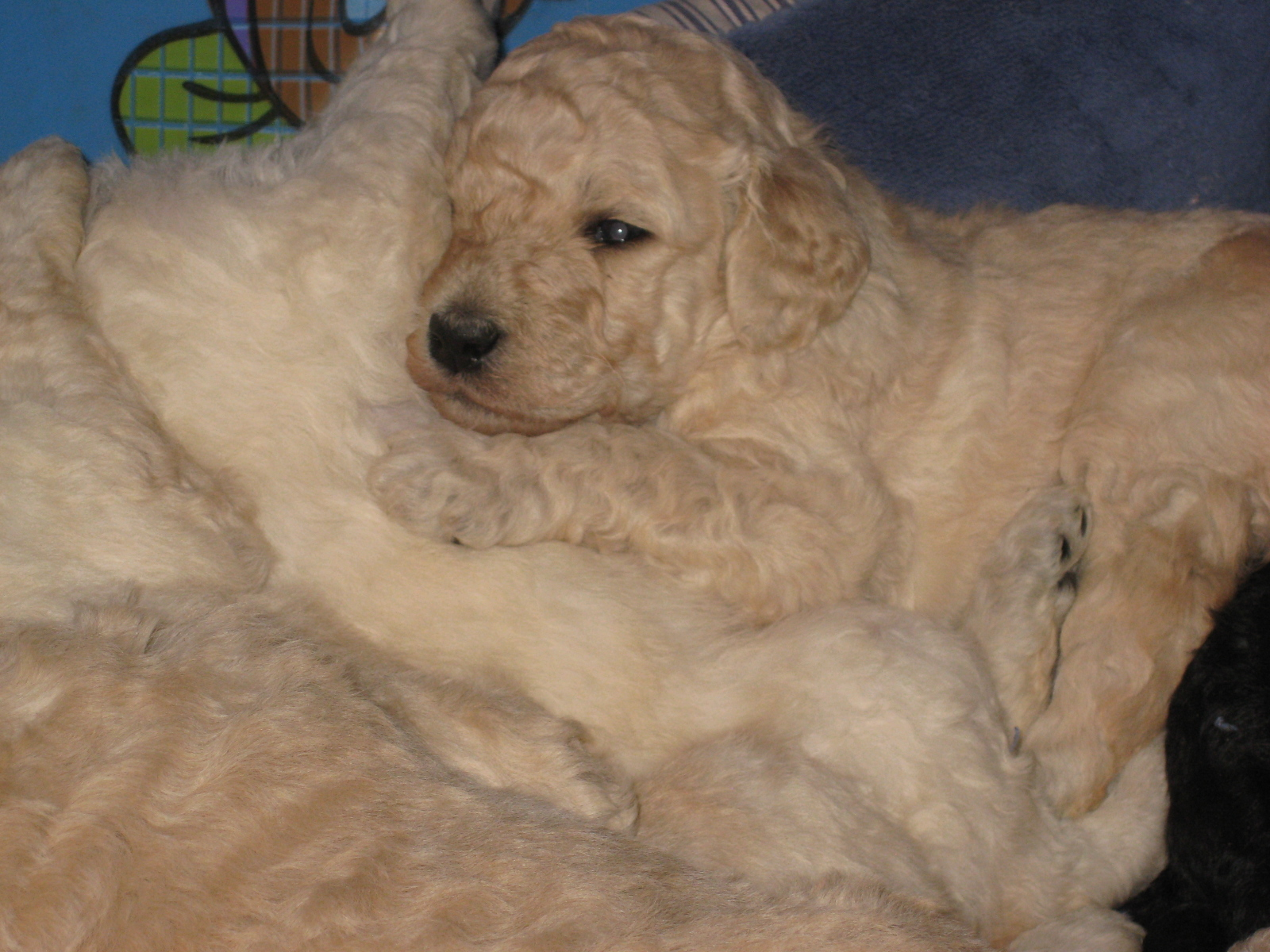 willowpups3weeks018.jpg